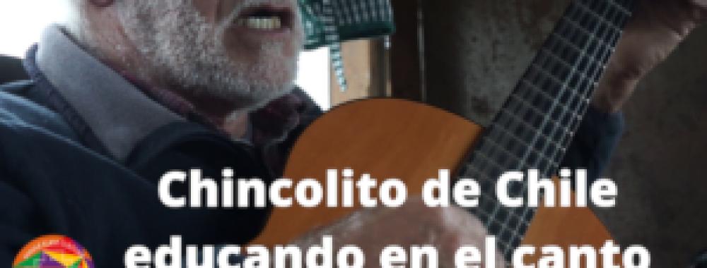 Chincolito de Chile educando en el canto campesino